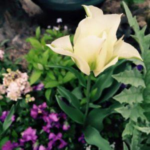ガーデン写真1