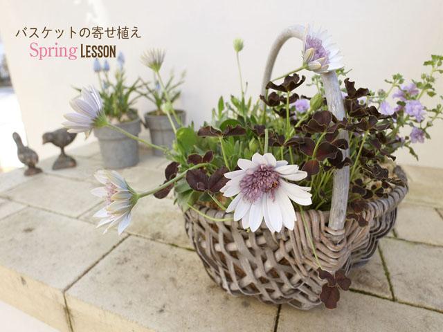 春の寄植ワークショップ開催!